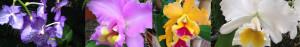 orchids costa rica