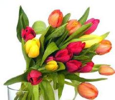 tulips of costa rica